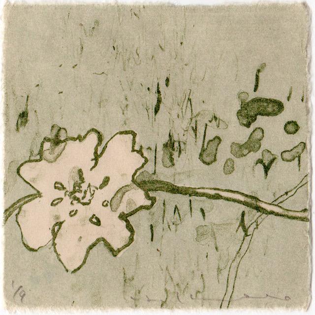 kondo_flower_1--1